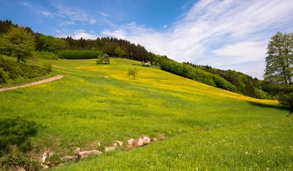 Frühling in Prinzbach bei Biberach im Kinzigtal