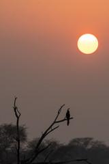 A flock of birds flying during sunset inside bharatpur bird sanctuary