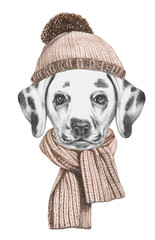 Portrait of Dalmatian with hat and scarf,  hand-drawn illustration