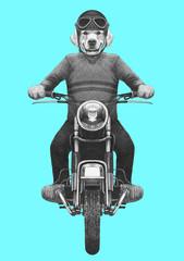 Golden Retriever rides motorcycle, hand- drawn illustration