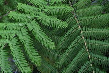 Green plant australia