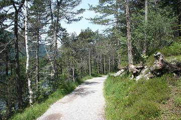 Waldweg Eibsee