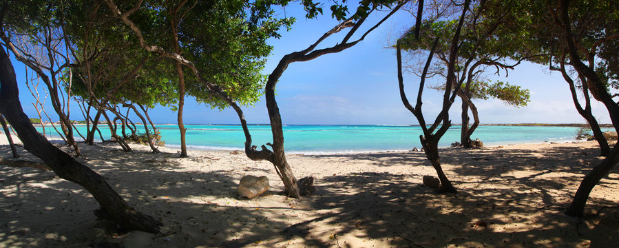 Turquoise waters and windswept trees of Baby Beach Aruba