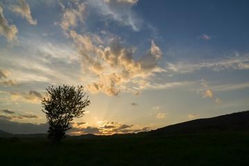 Abandoned walnut tree on meadow during sunset. Slovakia