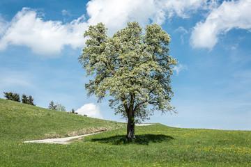 Baum freistehend