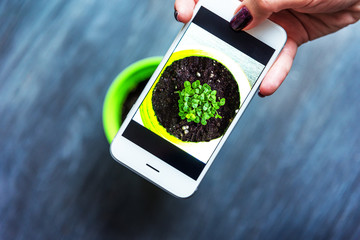 woman takes pictures of basil sprouts in a pot on a smartphone