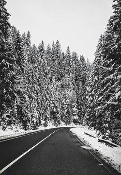 Black asphalt road in snowy forest at winter