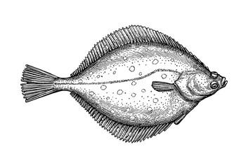 Ink sketch of flounder.