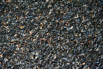 Sunflower seeds in storage
