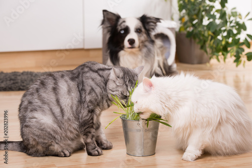 Haustiere In Der Wohnung Stockfotos Und Lizenzfreie Bilder Auf