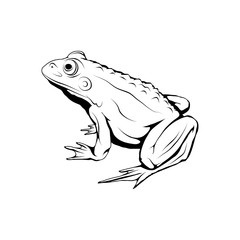 Vector frog logo. Frog Sketch. Vector artwork.