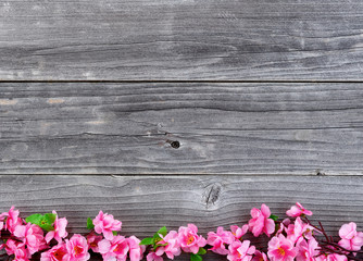 Lower border of Silk Cherry Blossom branches on vintage wood in overhead view for spring concept