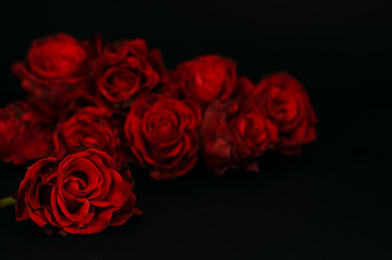 Red roses in the darkness.