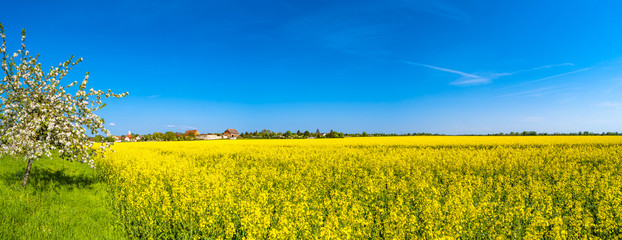 Wall Murals Yellow Panoramic view of beautiful farm landscape of rapeseed field in Spring