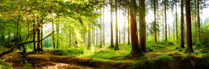 Spoed Fotobehang Bomen Beautiful forest in spring with bright sun shining through the trees