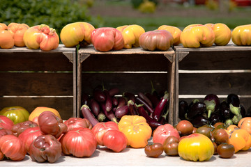 Market tomatoes in crates