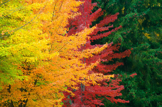 Layers of Autumn Color