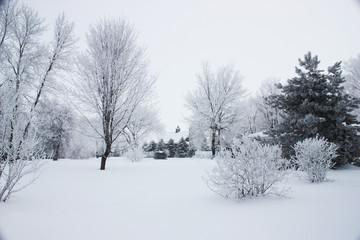 Minnesota Winter II