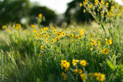Yellow Flowers On A Sunny Spring Day In Texas Stock Photo And