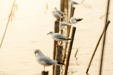 Seagull perched on a wooden at coast in Thailand on sunny afternoon