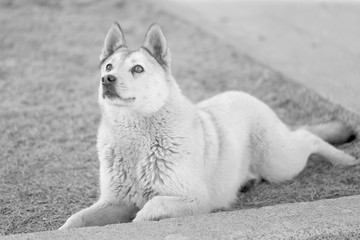 Photo of a funny white dog