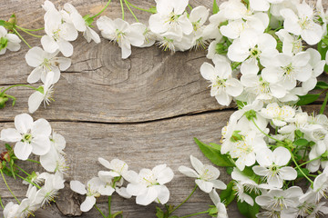white cherry blossoms on old wooden background. top view