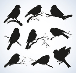 Vector drawing. Tits, sparrows and bullfinches on branches