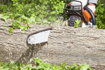 Cutting Tree Log with Chainsaw