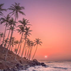 Silhouette of palm trees and shore during sunset