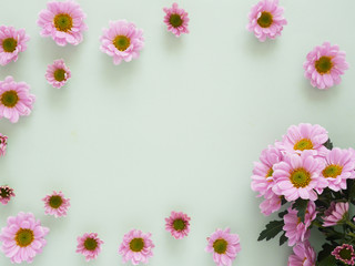 Composition of pink chrysanthemum flowers on a green background, top view, creative flat layout.