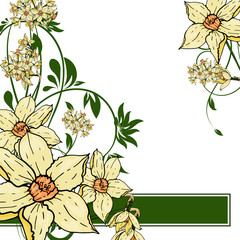 hand drawing  Narcissus flowers background.