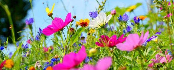 Wall Mural - Blumenwiese bunt - Hintergrund Wildblumen