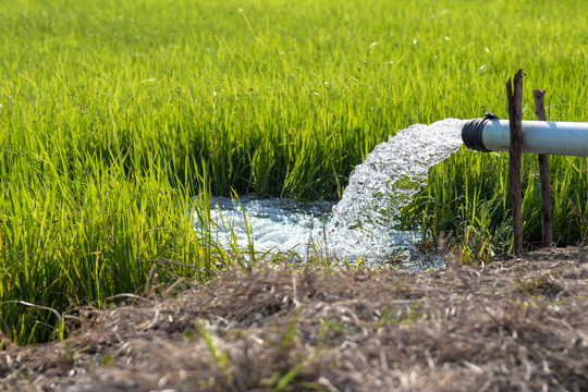 Close-up of water from a pipeline into a rice field.