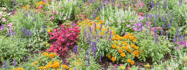 Panorama colorful flowerbed with variety of impatiens/balsaminaceae tropical flower such as walleriana, busy lizzie, balsam, garden balsam, zanzibar, patience plant, patient lucy. Gorgeous background