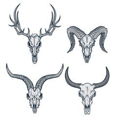 Animal skulls set. Vector illustration of deer skull, goat skull, ram skull and bull skull in engraving graphic, ink technique. Good for posters, t-shirt prints, tattoo design.