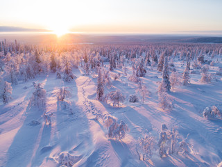 Sunset view over the winter forest