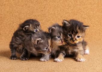 Newborn kitten. Day 18 of life.