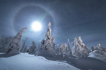 View of moon halo over the snowy trees