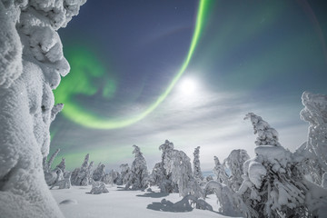 View of northern lights over the snowy trees