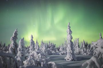 Aurora borealis over snowy trees
