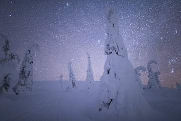 Snowcovered trees under night sky