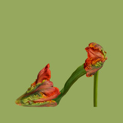 Flower shoe against plain background, red and green