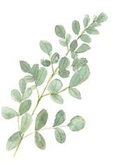 Green leaf on white, watercolor illustrator