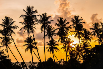 silhouettes of palm trees on a sunset background in the tropics