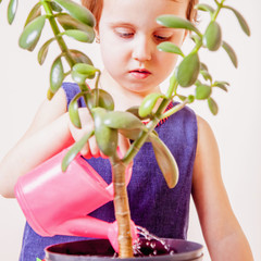 Cute little child girl gardener taking care of houseplant Crassula ovata jade plant money tree as symbol of wealth, success and business
