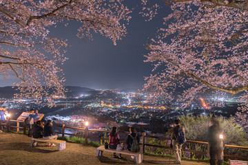 宮城県 船岡城址公園の夜桜 Funaoka castle