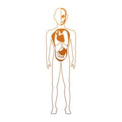 Human body anatomy cartoon vector illustration graphic design