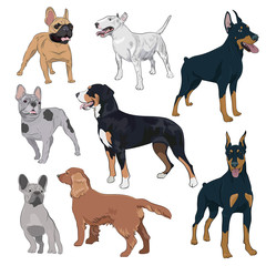 Standing dogs collection isolated on white background. Purebred canines set for your design. Bulldog, doberman, spaniel, bull terrier and swiss mountain dog.