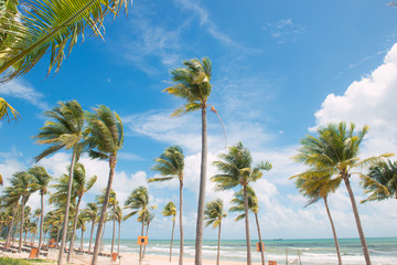 Coconut Palm trees on white sandy tropical beach. Summer holiday and vacation concept.