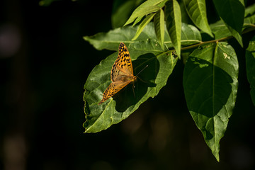 Brown butterfly staying alone on the leaves